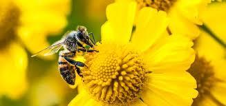 Des abeilles des oiseaux et des hommes